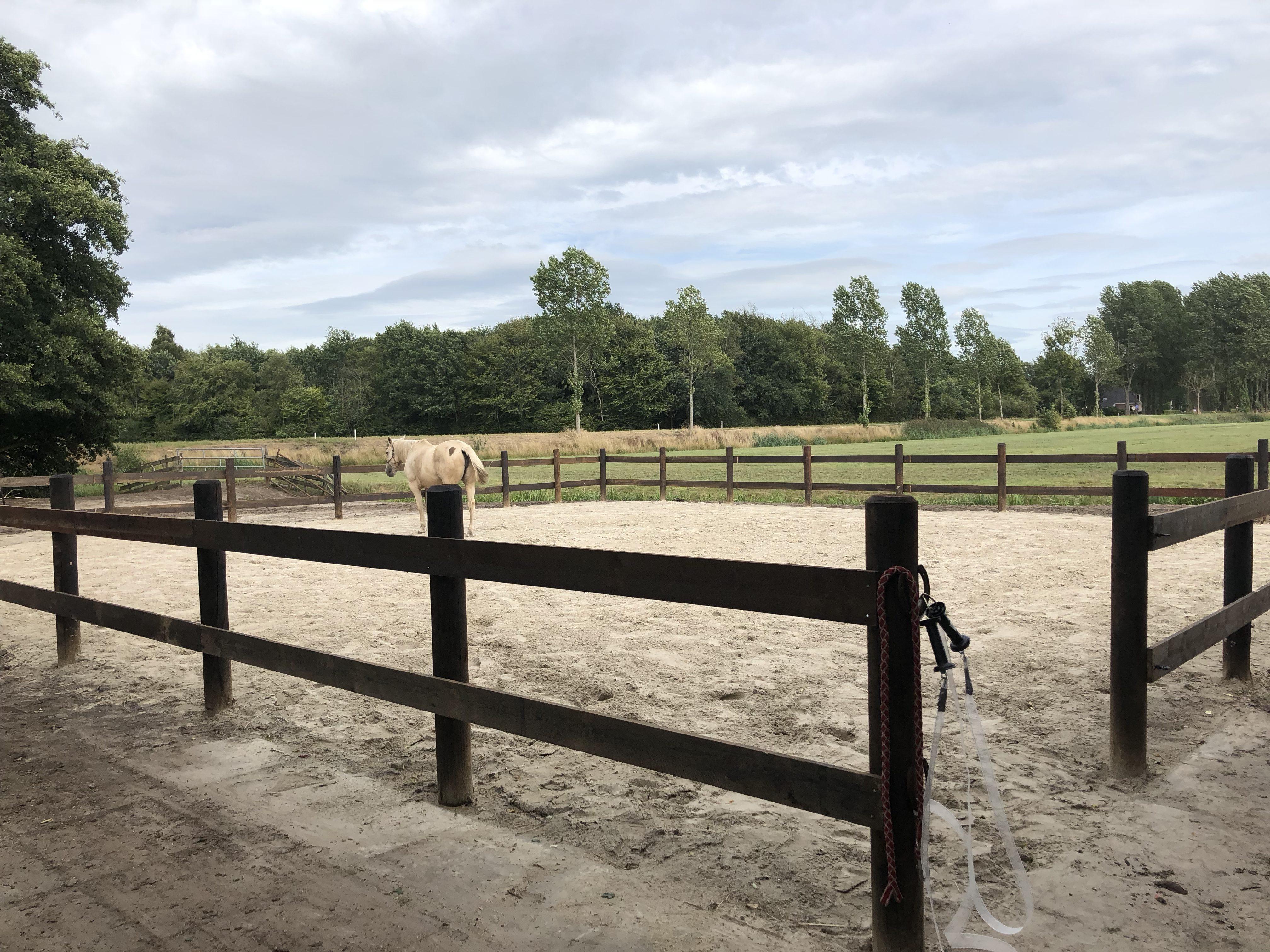 veilige paddock paardencoaching