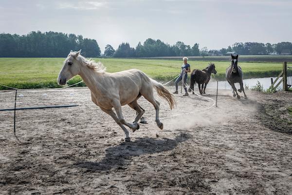 Quercia Mensenpaard.frl Coachpaard Friesland