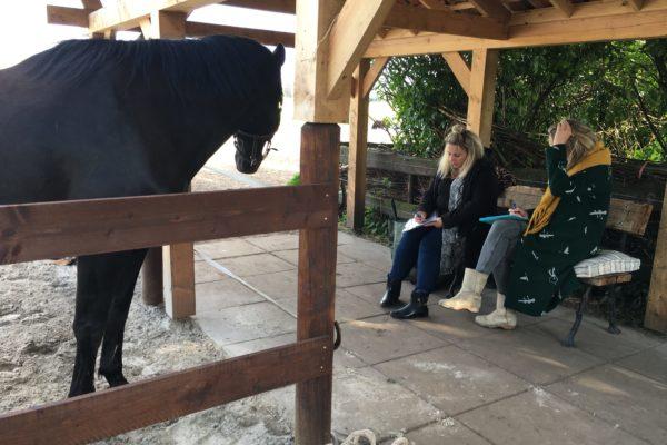 Paardenoaching - Groepen - Mens & Paard